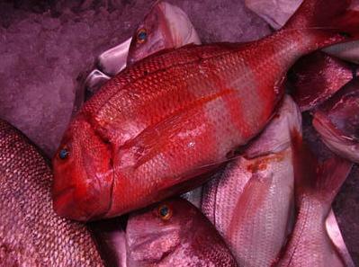 Urta, un pescado de sabor extraordinario