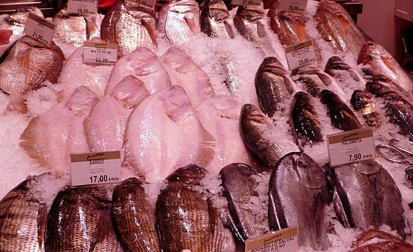 Multitud de pescado en septiembre en Ernesto Prieto
