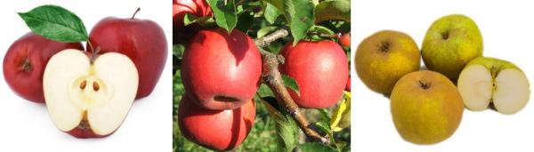 Muestrario manzanas Fuji, Pink Lady, Reineta en Frutas Charito