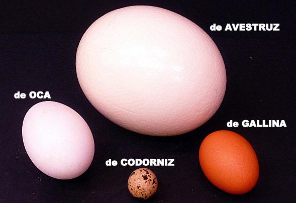 Diferentes variedades de huevos de Pollería Hermanos Gómez