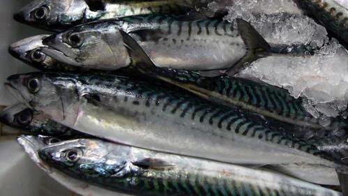 El verdel, un pescado azul sano y económico