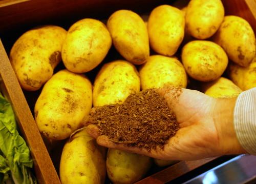 Patatas cultivadas en sustrato de turba