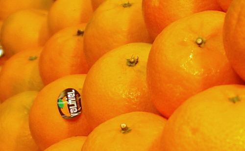 Mandarinas recién recolectadas