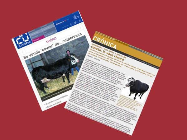 La vaca Careta en la prensa