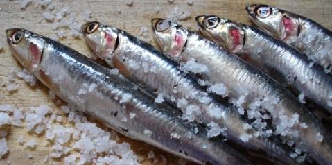 Boquerones, el pequeño pescado azul