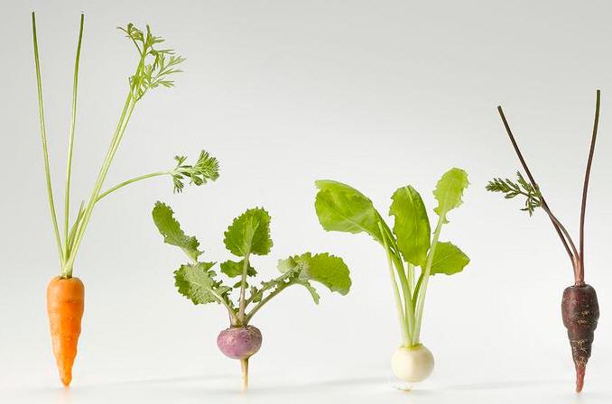 Mini hortalizas