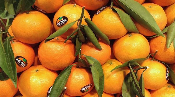 Clementinas recién cosechadas
