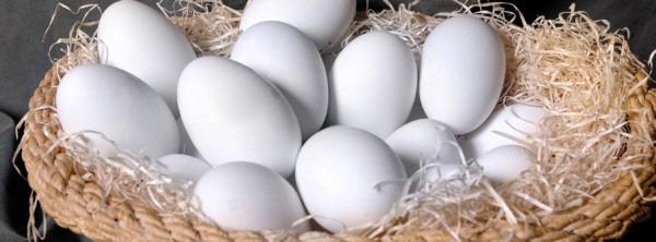 Huevos de oca del Duratón