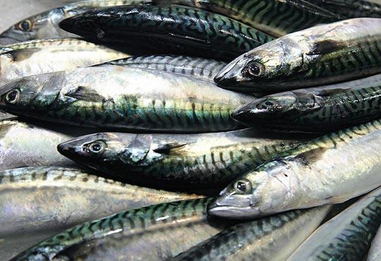 Jurel, pescado azul