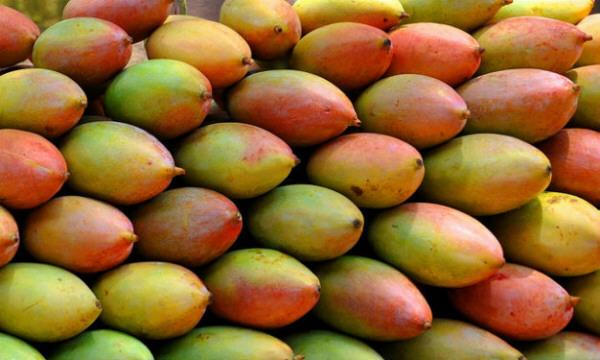 Mangos, frutas tropicales