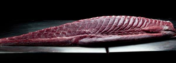 Pieza de atún rojo con el sello Balfegó